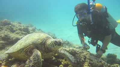 Turtle Canyons Reef In Oahu Oahu Diving In Honolulu