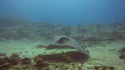 Scuba Diving Dangers In Hawaii Dive Dangers Dangerous